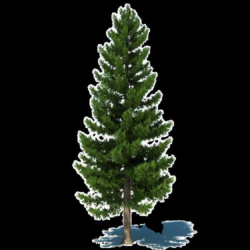 #freetoedit #ağaç #tree #green #yeşil #yaprak #leaf #çam