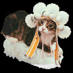 freetoedit cat котик food еда