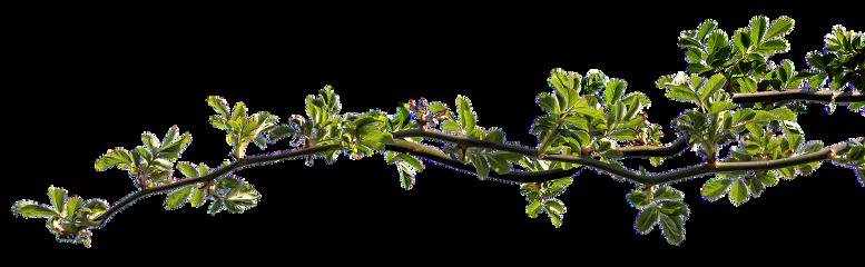 freetoedit ranting bunga pohon