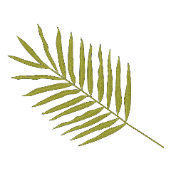 freetoedit green лист зеленый
