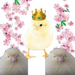 freetoedit birdking