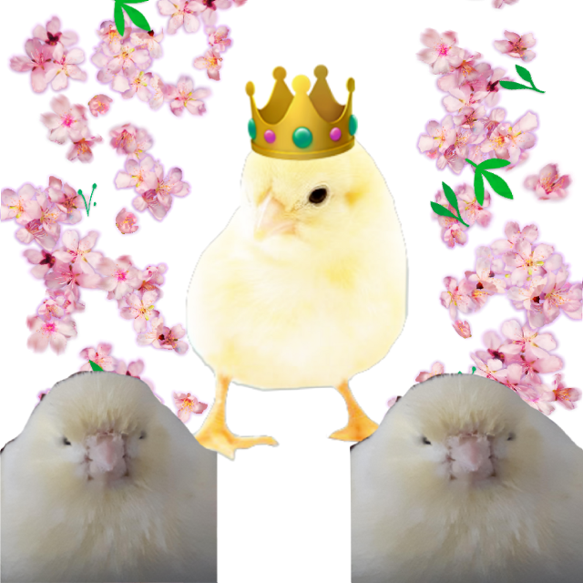 #freetoedit  #birdking