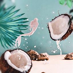 freetoedit coconut leaves palmtreeleaves sand srcmonsteramoment monsteramoment