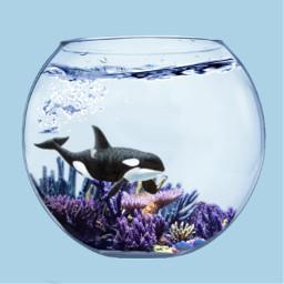 freetoedit fishtank bowl water ocean