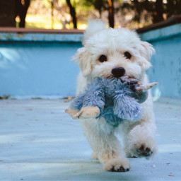 freetoedit pets animals dogs lovely