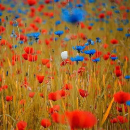 freetoedit redwhiteandblue flowers