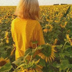 yellowaesthetic yellow sunflower sun sunlight