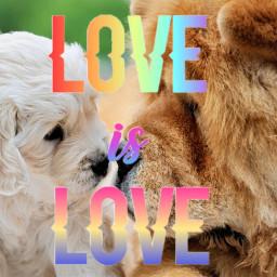 freetoedit love dogs