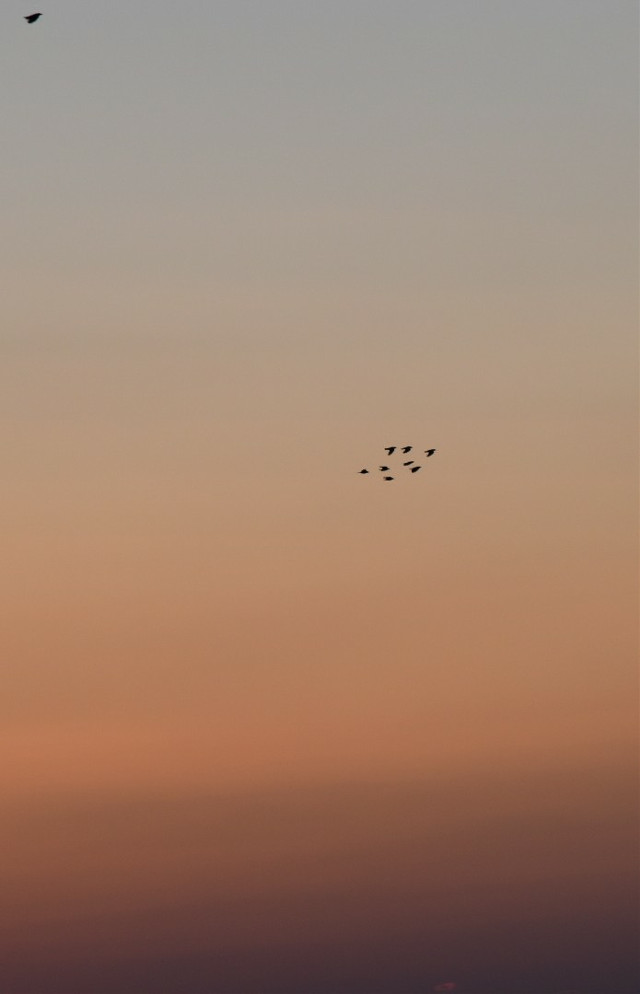 🧡 The birds also meet the corona regulations🤭 So please keep your distance ;)  may it be a wonderful day for all of us today🙏   #freetoedit #sunrise #lovethisview #birds #flying #interesting #goodmorning #goodvibes #backround #sky  #withouteffect #withoutfilter #rightnow