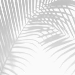 freetoedit shadow shadows palmleaves leaves