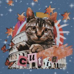 freetoedit aesthetic wallpaper vintage cat