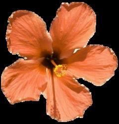 stickersjani jani flores flowers vintage freetoedit