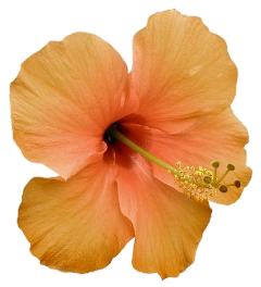 stickersjani jani flores flowers freetoedit