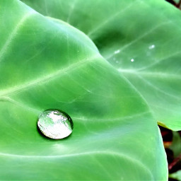 raindrops nature leaf photography india