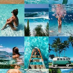 freetoedit water dog coconut turtle ccsummermoodboard summermoodboard #summertime