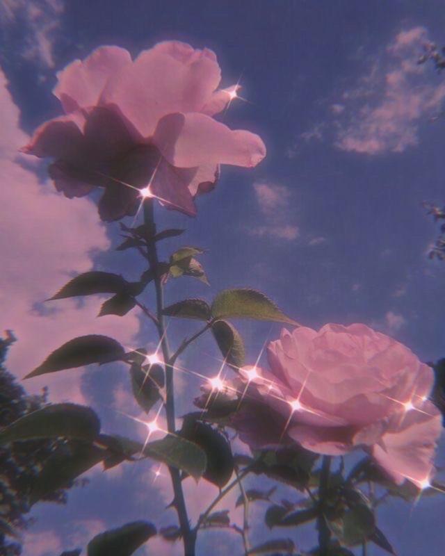 #flower #aesthetic #pink 🌸✨💖