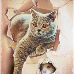 freetoedit cat wall mouse maskeffects rcrippedpaper rippedpaper