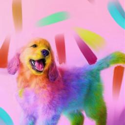 freetoedit dog pallette colours pink srccolorpalette