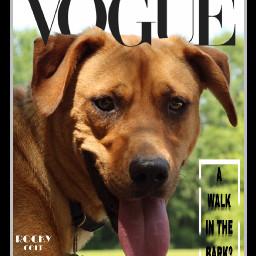 vogue voguemagazine voguechinacoverchallenge voguecover dog freetoedit