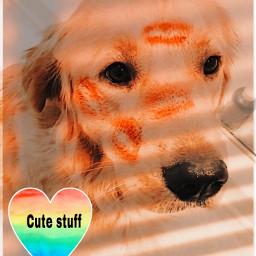 freetoedit goldenhour goldenhours dog cute