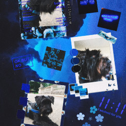 freetoedit mydog darkblueaesthetic lotsofstickers effect