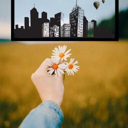 freetoedit city flower flowers balloon