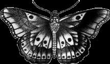harrystyles butterfly tattoo chesttattoo butterflytattoo freetoedit