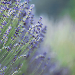 freetoedit photography naturelovers flowers naturebeauty