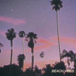 aesthetic beach blesivfam palmtrees vibes freetoedit