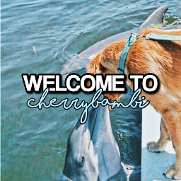 newacc introduction welcome doggo dolphin