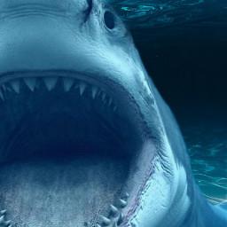 freetoedit shark scary animal sea ircwaterworld waterworld