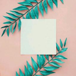 freetoedit polaroidframe framedesign