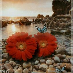 freetoedit sea stones flower roses rcholographicbutterflies holographicbutterflies