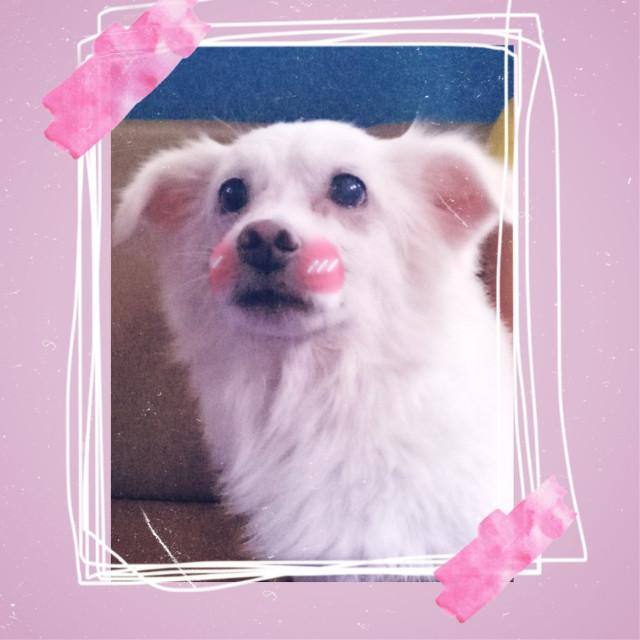 #freetoedit #doggie