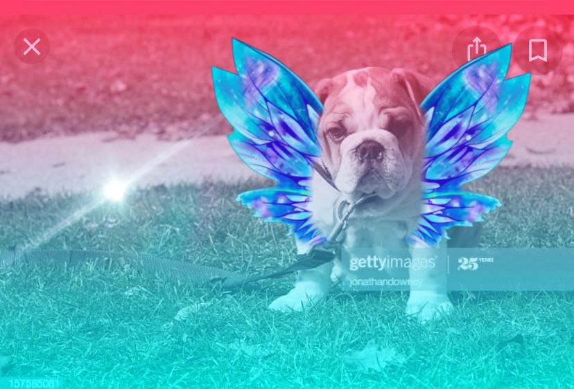 #freetoedit cute doggie