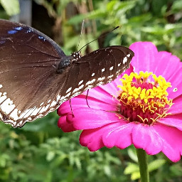 butterfly nature kerala india