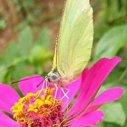 nature butterfly kerala india