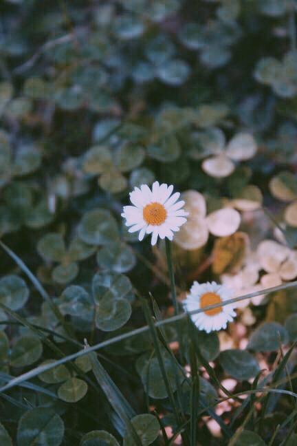 #freetoedit #edit #art #photography #flowers