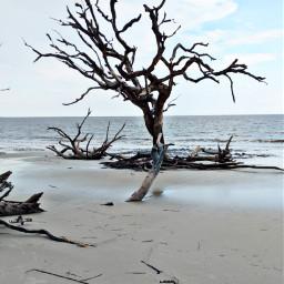freetoedit beach summer atlantic ocean