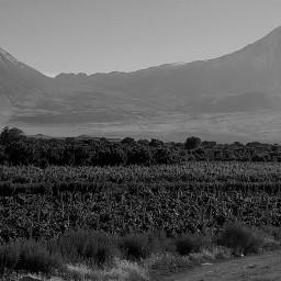 blackandwhite mountain ararat nature freetoedit