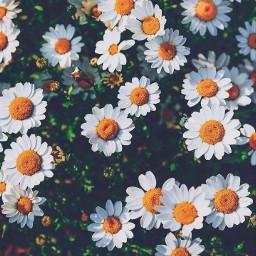 flowerpower cool sun