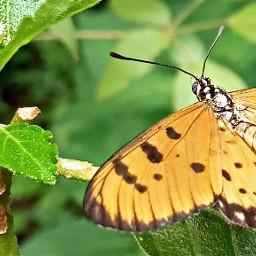 birthday sis love butterfly kerala