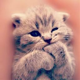 cat cute xoxo cool love