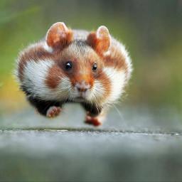mouse cute cutestanimal cool xoxo