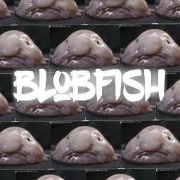 blobfishandcakeeater blobfish freetoedit