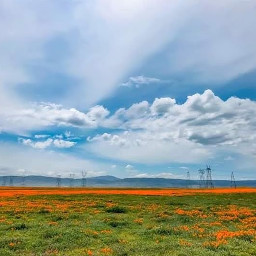 freetoedit blueskyandclouds california poppies roadtrip