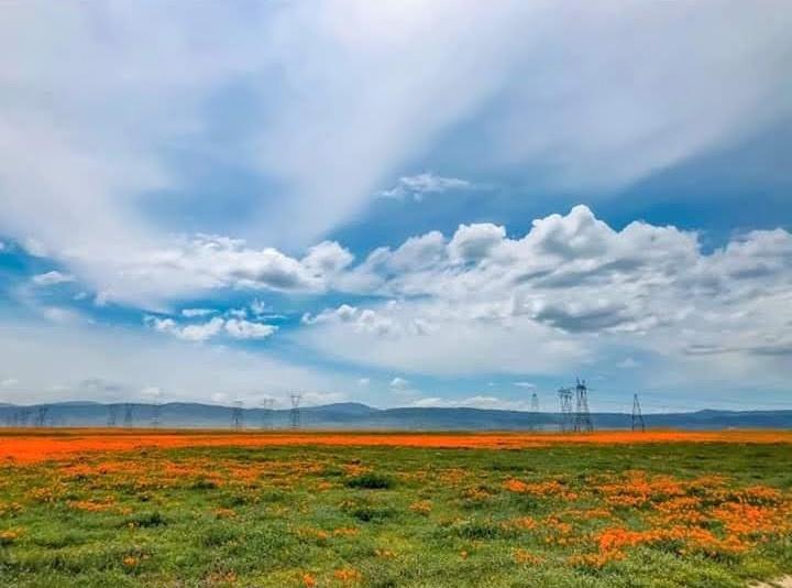 #blueskyandclouds #california #poppies #roadtrip #roadtrippin #californiadreamin #freetoedit