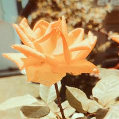 floral_aestheticc