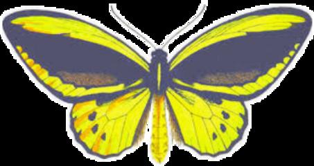 freetoedit yellowbutterfly yellowaesthetic yellowcolor yellow