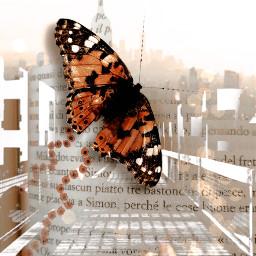 vipshoutout doubleexposure butterfly motiontool madewithpicsart freetoedit